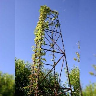 Obelisk Ranksäule