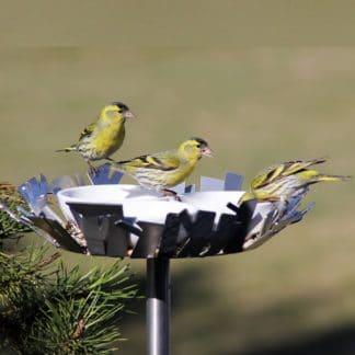 Tränke für Vögel