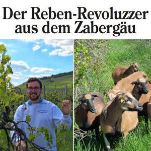 Pressebericht Weingut Wolf 2019